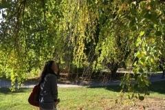 acton-arboretum-20171025-9442