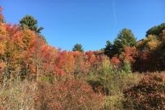 acton-arboretum-20171025-9493