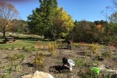 acton-arboretum-20171025-9499