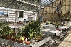 bartlett-arboretum-20190905-00014
