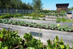 rooftop-gardens-20170227-0004