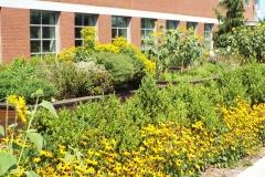 uvm-gardens-20170227-0002