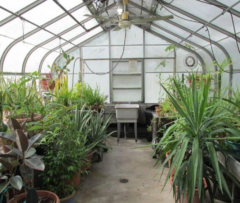 Plant Care Guide